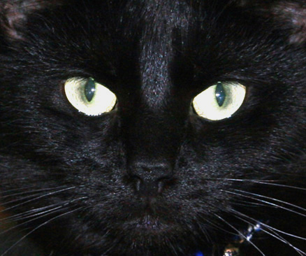 Photographing Black Cats